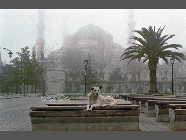 Dört Ayaklı Belediye: İstanbul'un Sokak Köpekleri