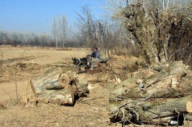 """""""Arazi Toplulaştırılması""""nda Yüzlerce Ağaç Katledildi"""