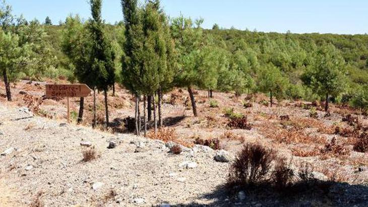 Gelibolu'da 15 Şehitlik İhya Edilecek