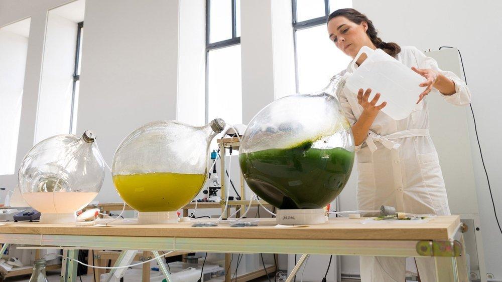 Hollandalı Tasarımcılar Yosundan Biyoplastik Üretti