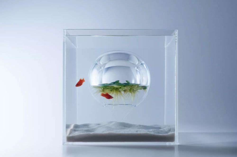 Her Canlının İyi Tasarlanmış Mekanlara İhtiyacı Var, Balıkların Bile...