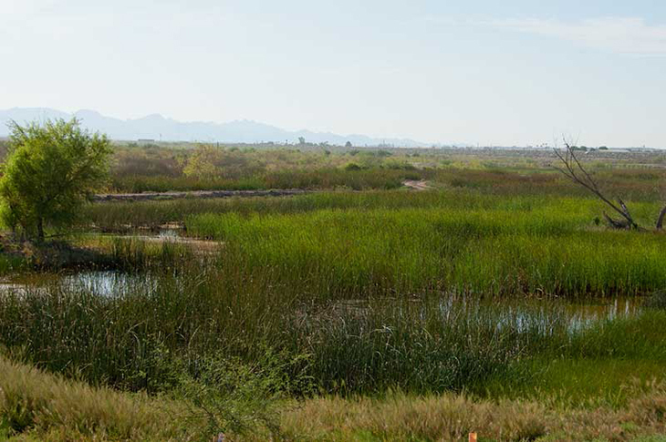 yuma_east_wetlands_23.jpg