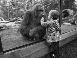 """""""Coexist: Rethinking Zoos"""" Yarışması Sonuçlandı"""