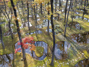 "Junya Ishigami'den ""Water Garden"""